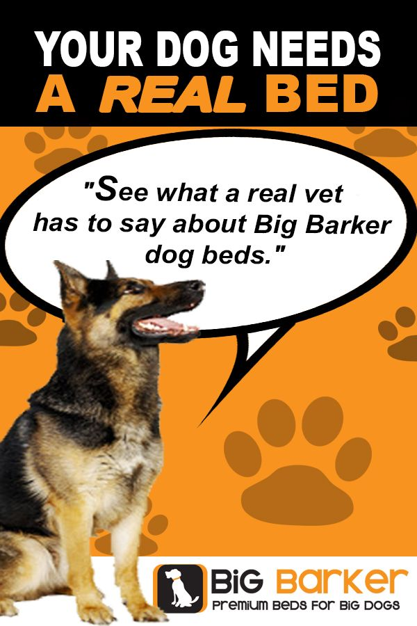 Your Dog Needs A Real Bed Big Dogs Are Especially Prone To Hip Dysplasia And Canine Arthritis Their Joints Need Extra Prot Dog Bed Dog Arthritis Big Dog Beds