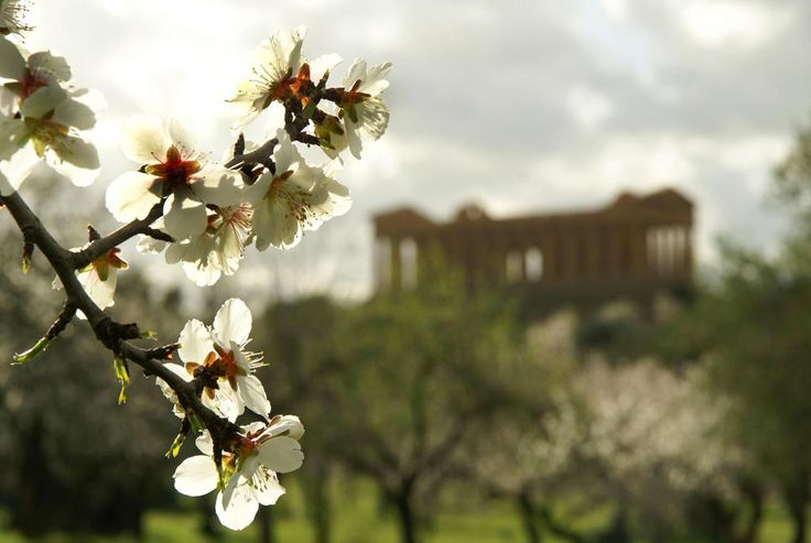 """Day 3 - Valley of the Temples stated World Heritage Site, where among hundreds of almond trees, the rests of the ancient Akragas rise. It was defined by Pyndar """"the most beautiful city of mortals"""""""