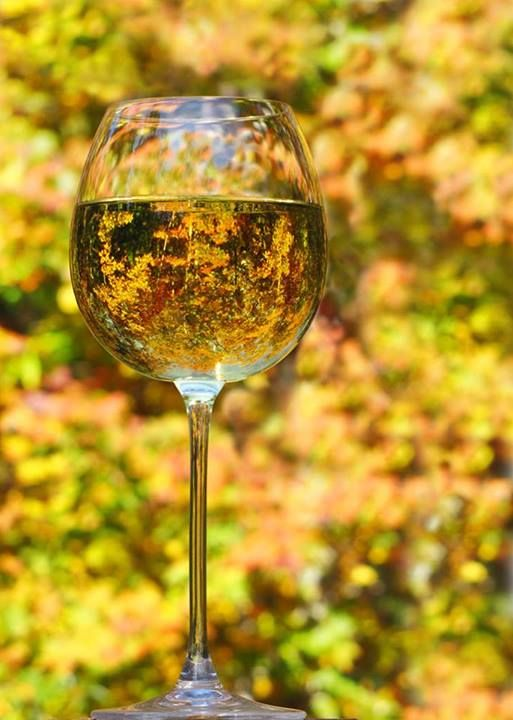 """Photographer says, """"Happy HalloWINE from Blairsville Georgia."""" What a beautiful autumn setting for a relaxing glass of wine!"""