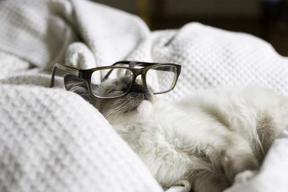 14 Adorable Cats Wearing Glasses