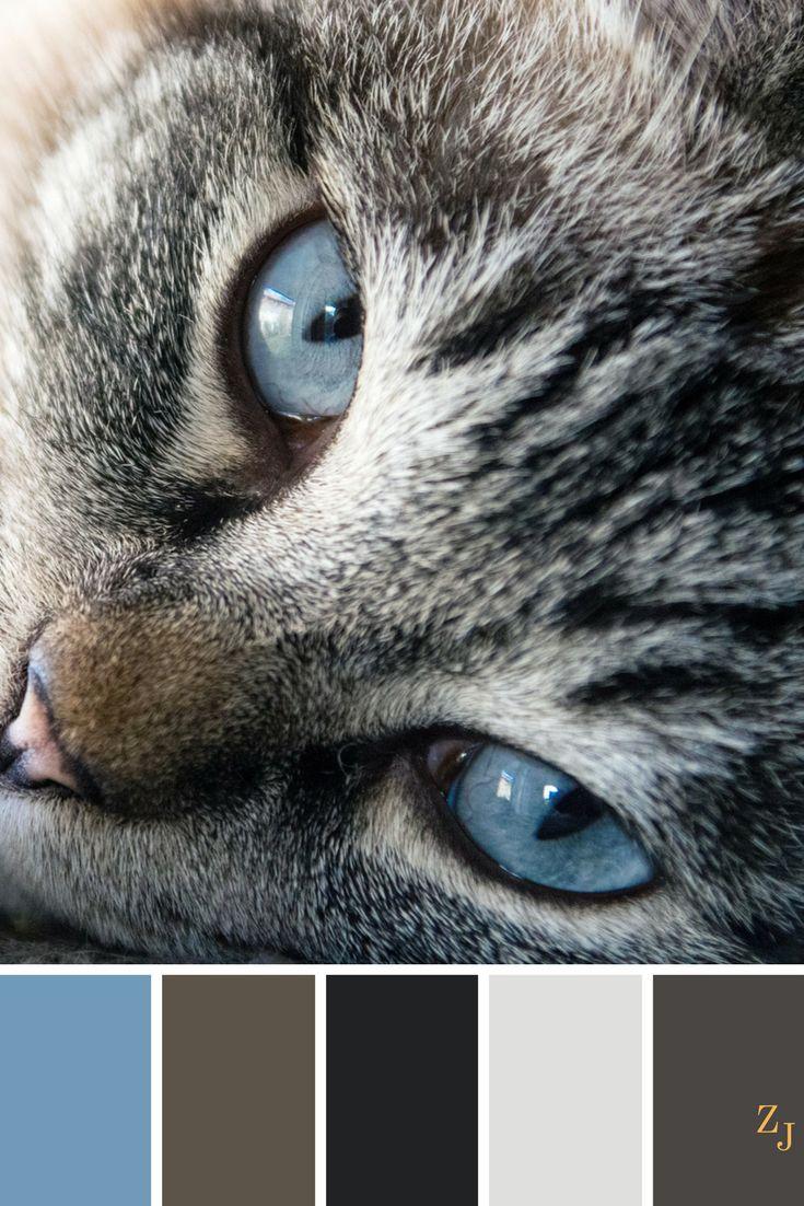 ZJ Colour Palette 255 #colourpalette #colourinspiration