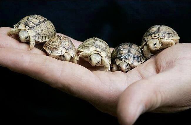 Turtles !! :)