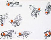 Ähnliche Artikel wie ACEO Drosophila gehen über ihre Business - archivalische Druck - Insekt Kunst auf Etsy