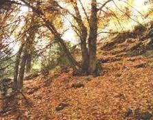 Bosque Caducifolio: Medio físico-químico: Zonas templadas. Latitudes medias y clima oceánico. Seres vivos: Los árboles son planifolios ...