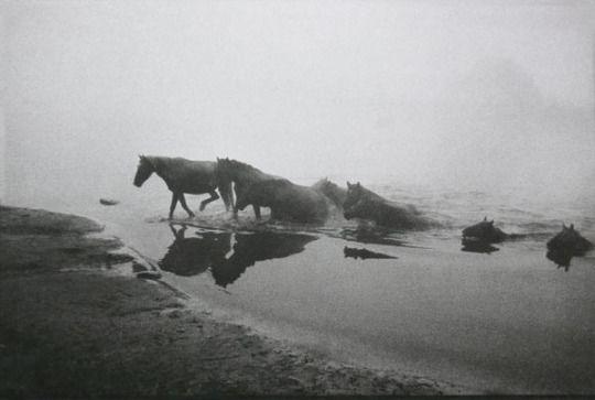Scorpio Races - Capaill Uisce                                                                                                                                                                                 Plus