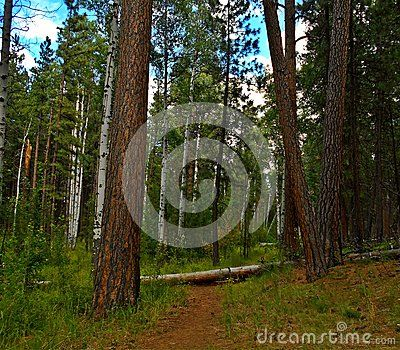Hiking trail at Cold Springs Campground near Sisters, OR