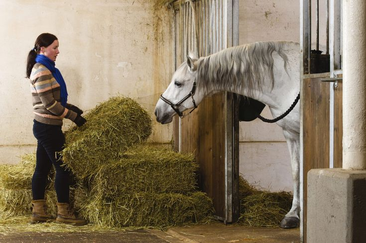 You Should Know These Five Equine Nutrition Disorders