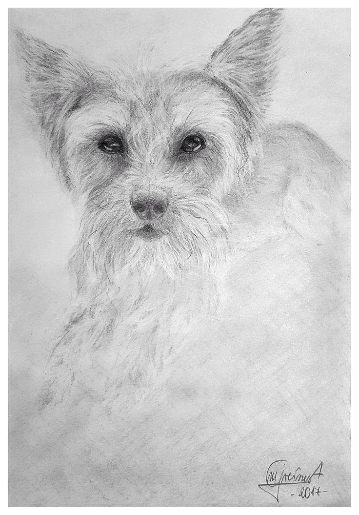 Yorkshireterrier sketch by Magdalena Greinert