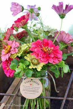 Cut Flower Arrangement planting this year:  Cosmos  Sunflowers  Cornflower  Bishops Flower  Zinnias  Zinnia Cactus Mix  Daisy Gloriosa Mix