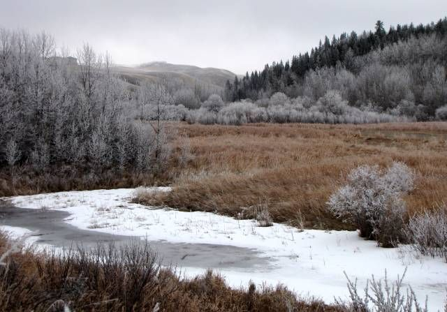 Frost and ice in the coulee at Cochrane Ranche, Alberta, Canada.