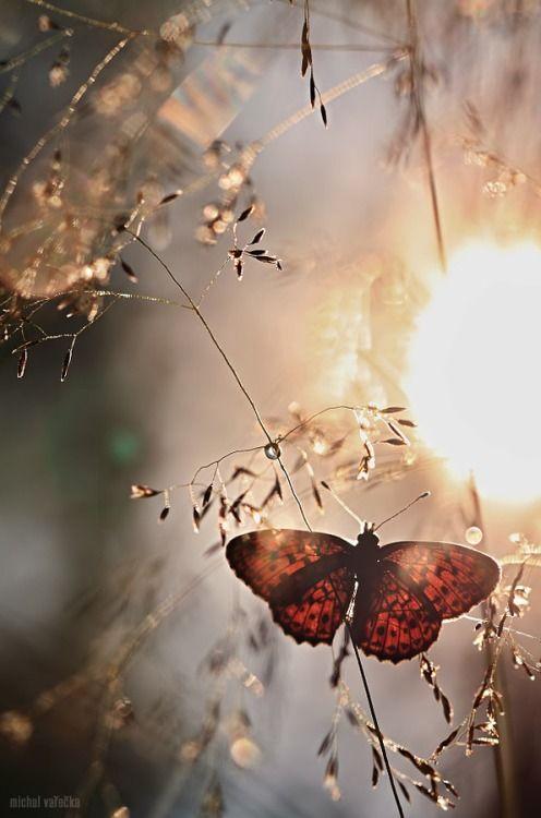 Sou borboleta buscando o meu espaço pra morar... DC
