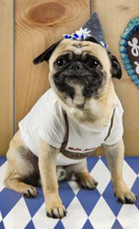Hundezubehör im Trachten Stil im Hunde Shop kaufen