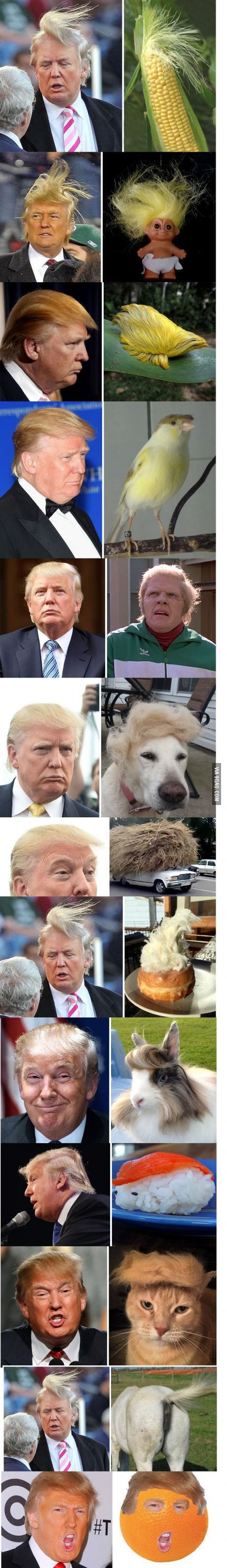 15 Things That Just Look Like Donald Trump, Who Wore It Better?                                                                                                                                                                                 More