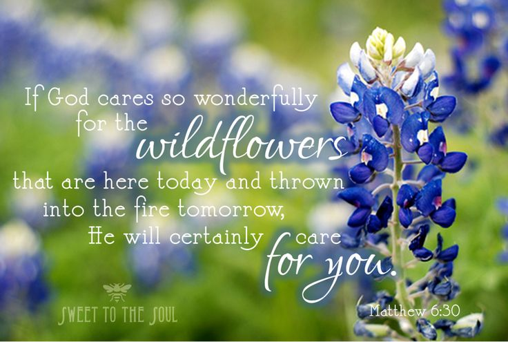 If God Cares So Wonderfully For Wildflowers That Are Here