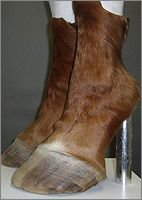Hoof Shoes by Iris Schieferstein.