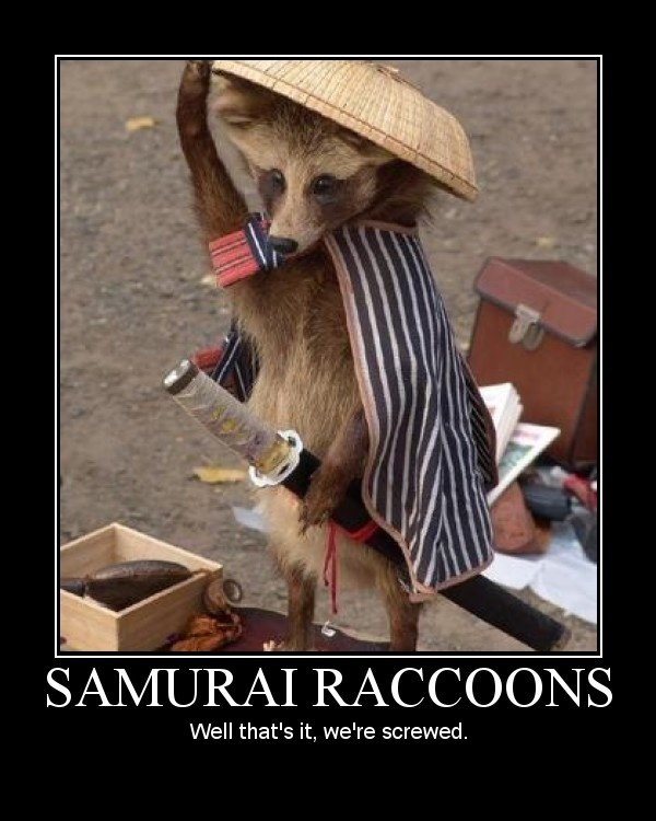 Pretty much.: Samurai Raccoon, Animals, Funny Stuff, Funnies, Humor, Funny Animal, Things, I Got This