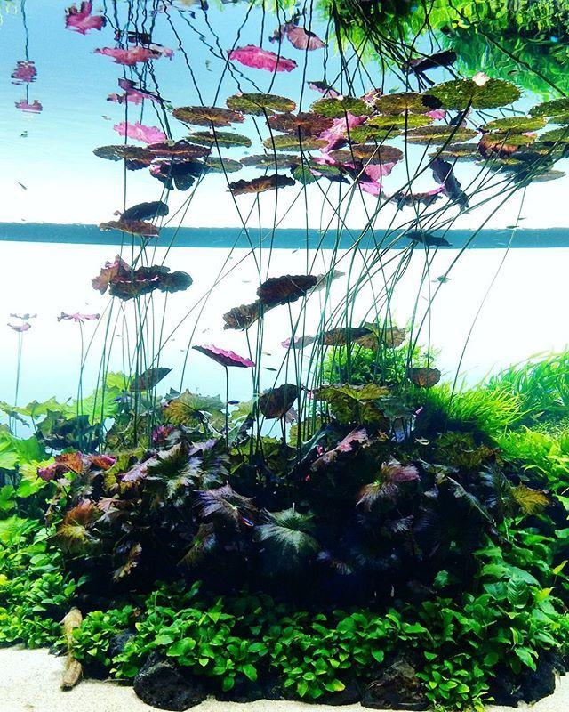 aquarium aquascape design ideas 3217 best aquascaping paludariums terrariums images on pinterest