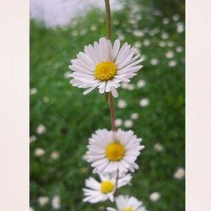 Blumenkette