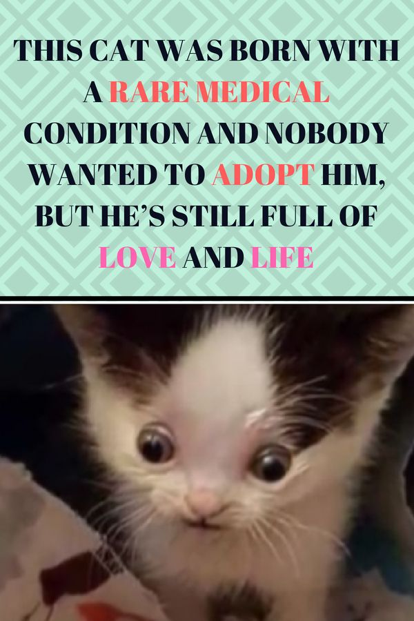 This Cat Was Born With A Rare Medical Condition And Nobody Wanted To Adopt Him But He S Still Full Of Love And Life Cats And Kittens Cats Cat Quotes Funny