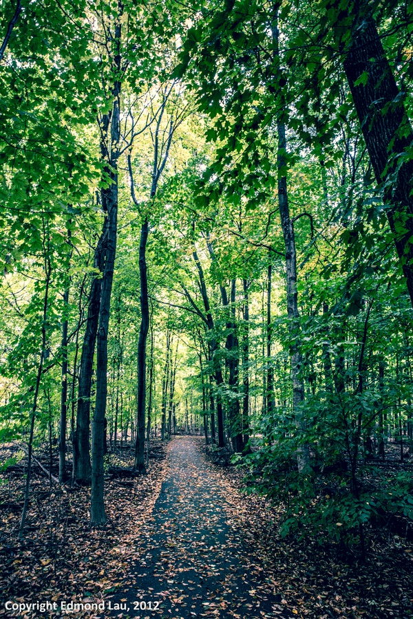 Green - Bronte Creek Park