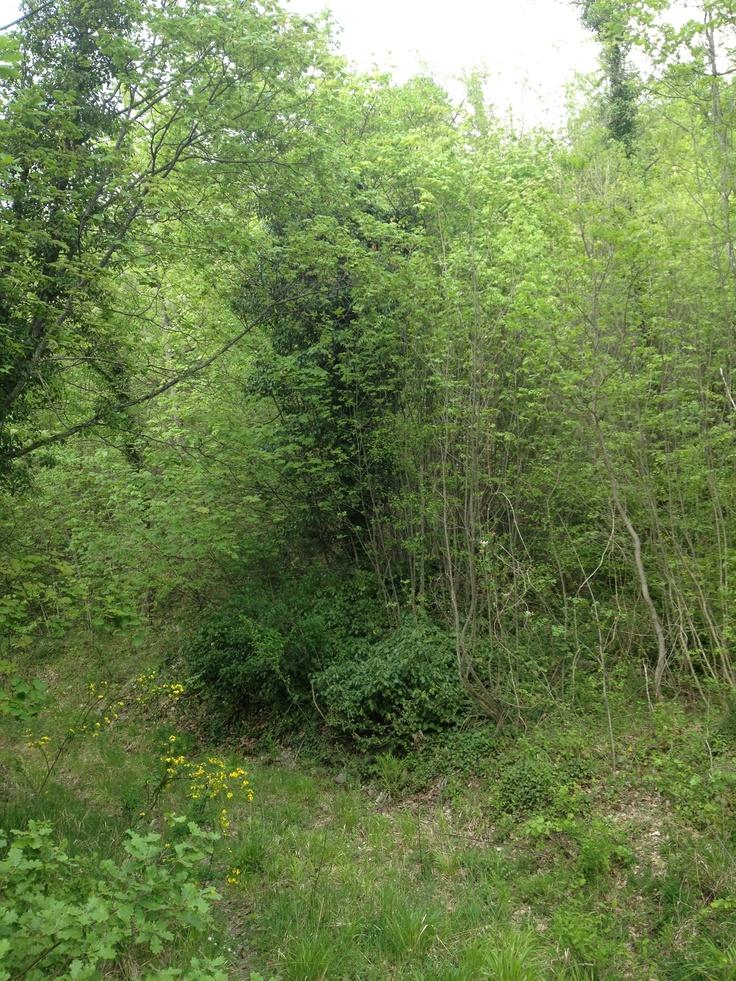 Foresta abruzzese - colledimezzo