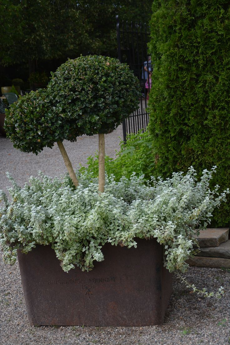 47 best Topiary images on Pinterest | Container garden, Topiary ...