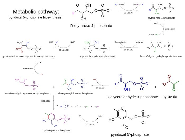 Metabolic pathway- pyridoxal 5'-phosphate P5P (B6)-biosynthesis I v 2.0.svg