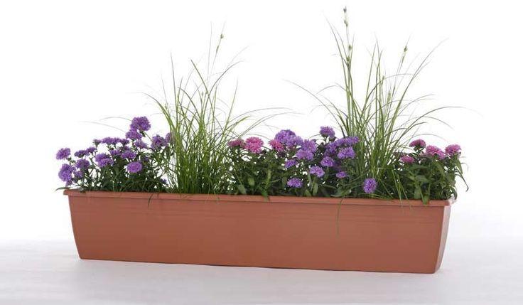 Die Kunststoff Balkonkästen Baiona sind aus hochwertigen Kunststoff gefertigt und in den Farben Anthrazit, Terracotta und Taupe erhältlich. Ein Pflanzkübel für einen grünen Balkon, durch die verschiedenen Farben können Sie ein frohes Farbenspiel auf Ihren Balkon gestalten. Unser Pflanzkasten ist in den Maßen 80 x 17 x 14,5 cm erhältlich. Diese und weitere Pflanz- und Blumenkübel aus Kunststoff finden Sie unter http://www.meingartenversand.de/pflanzkuebel/pflanzkuebel-kunststoff.html