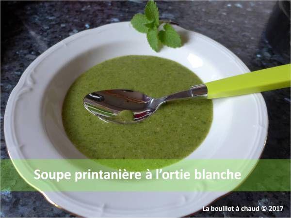 soupe ortie blanche lamier