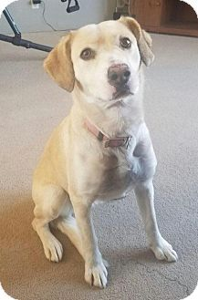 Pictures of Sadie Cuz a Labrador Retriever Mix for adoption in Florence, KY who needs a loving home.