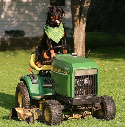 Esmond Rottweilers - Rottweiler Breeder - Ontario, Canada | Rottweiler Puppies…