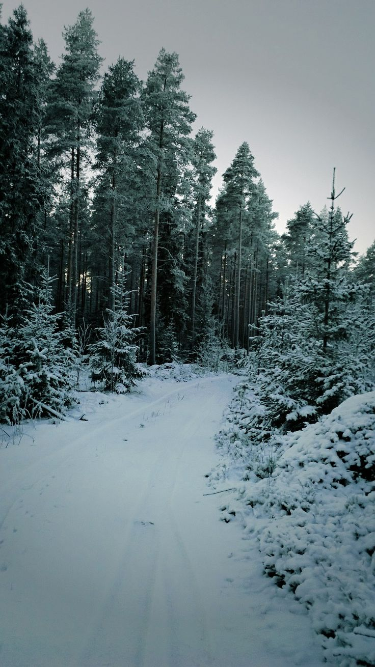 wintry forest. great place to have a walk! -20 degrees today. #Finland