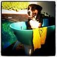 Dog Groomer - WOOF MEOW TWEET SQUEAK | Grooming | Gumtree Australia Wanneroo Area - Alexander Heights