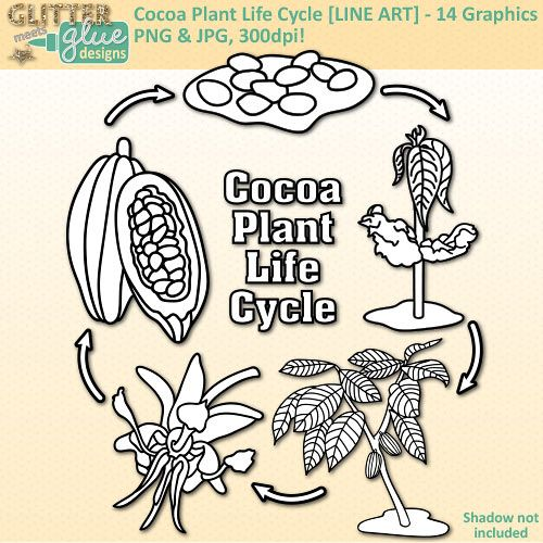 The 25 best cocoa plant ideas on pinterest vegan recipes vegan cocoa plant life cycle clip art fall plant graphics for science activities bw sciox Image collections
