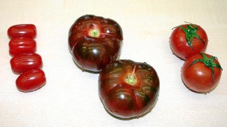 El Tomazur de Única Group se lleva el premio al mejor tomate del año