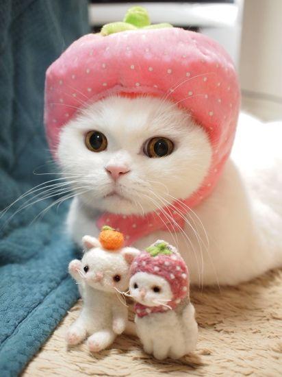 Cutie Cat in Pink Hat