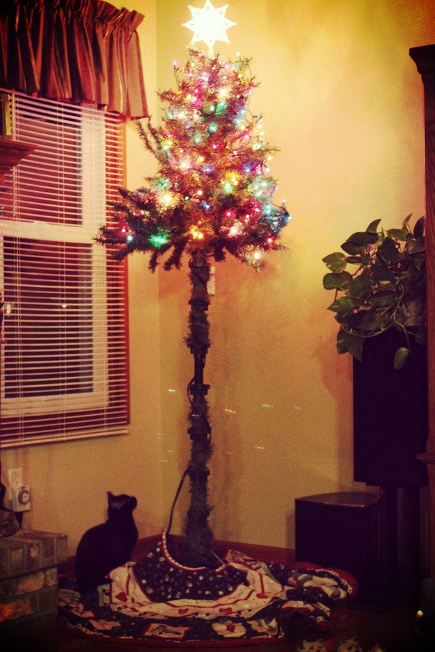 24 best cat proofing the christmas tree images on Christmas tree cat tower