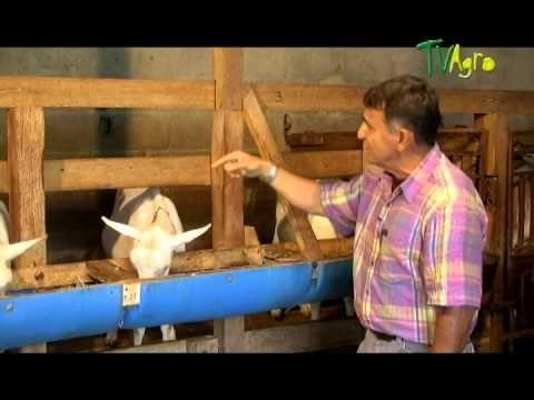 Cria Ecologica de cabras - Juan Gonzalo Angel Twitter @juangangel El ganado caprino se ha explotado tradicionalmente para la producción de leche, carne, piel...