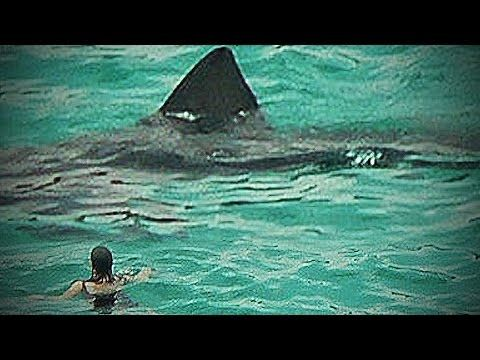 Megalodon Shark Caught on Tape | 2015 | Collection of the Best Part 2 - YouTube
