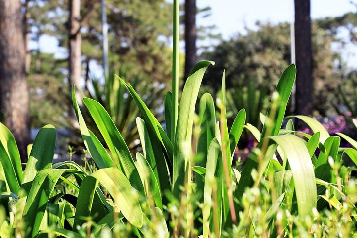 grass: Photos, Grass, Landscape, Natural