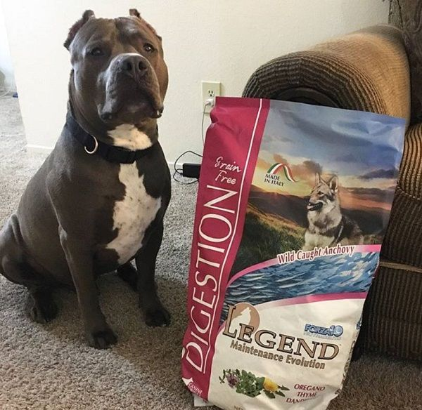#CleanIngredients  Legend Digestion for our beatiful Pitbull Milo #dogs #cats