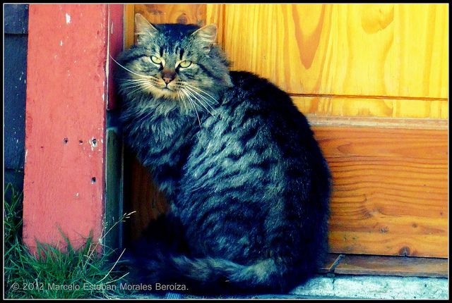 Cat in doorway by Marcelo Esteban | from Flickr Photo Sharing http://www.flickr.com/photos/marcel0esteban/7450959664/