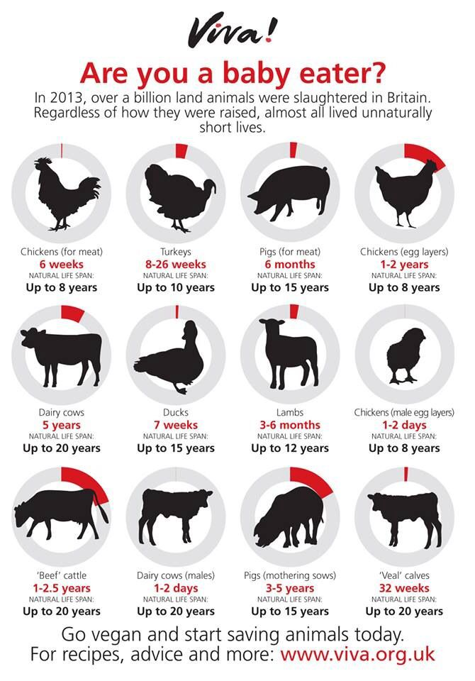 """Food"" for thought ..... go #vegan and start saving animals  #RePin by AT Social Media Marketing - Pinterest Marketing Specialists ATSocialMedia.co.uk"