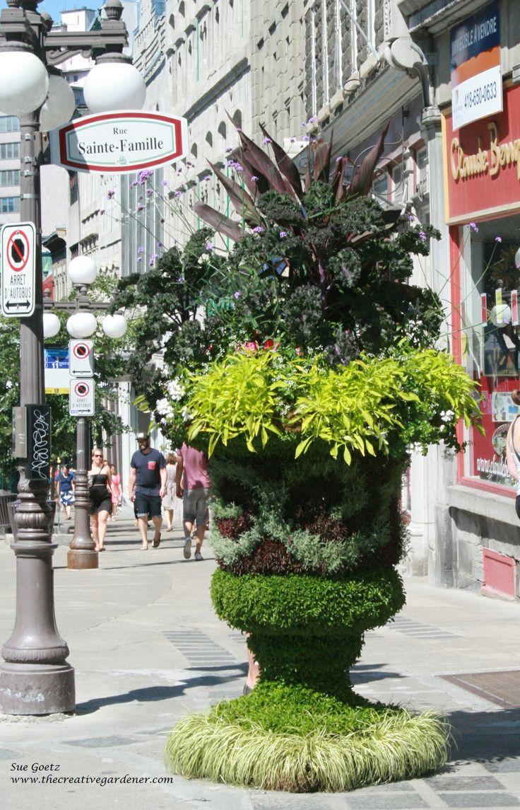 Big and beautiful Sedum covered urn in Quebec City