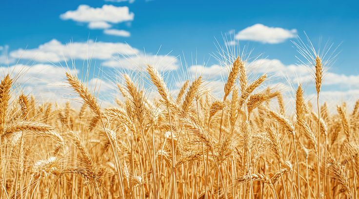 Pulse: Agricultural Land REITs Key Consideration to Grow Portfolio -LandThink.com #farmland #agriculture #realestate