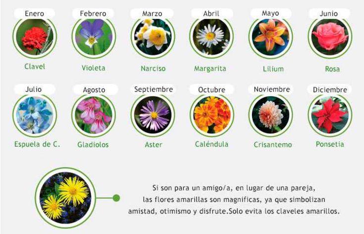 Saber que flores regalar según la ocasión  Saber que flores regalar según la ocasión nos ayuda