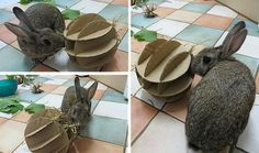 Instructions for making slotted cardboard feed ball for rabbits, to be stuffed with hay/treats.