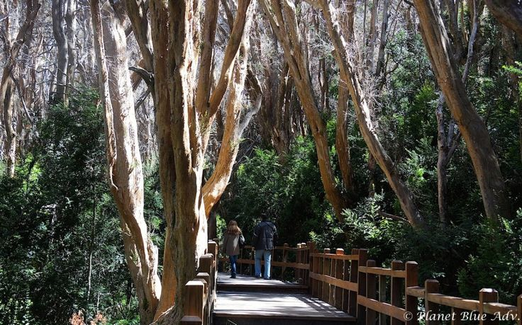 Bariloche: Argentina's Patagonia Paradise -  Arrayanas Forest