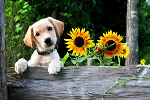 One of these things is not like the other!: Puppies Pictures, Animal Baby, Little Puppies, Pet, Flowers Photos, Baby Animal, Labs Puppies, Happy Puppies, Baby Cat