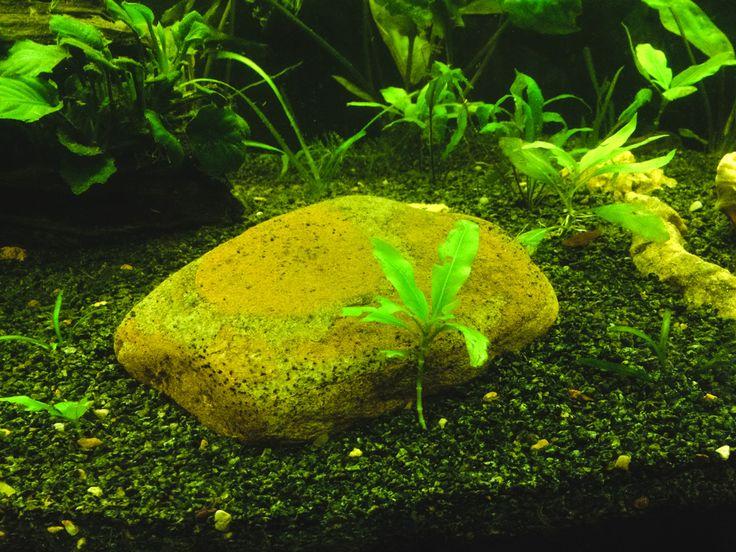 Грунт - важный компонент в аквариуме. Прежде всего грунт необходим для роста и развития растений, которые получают питательные вещества через свои корни.
